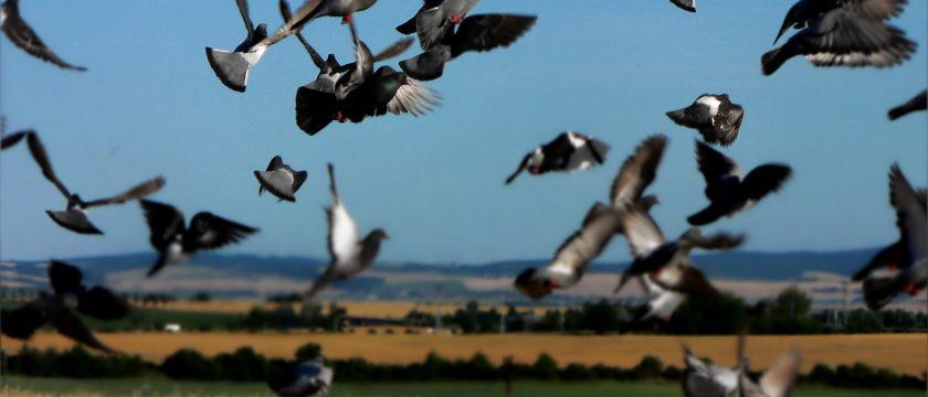 bird-control-slider-6