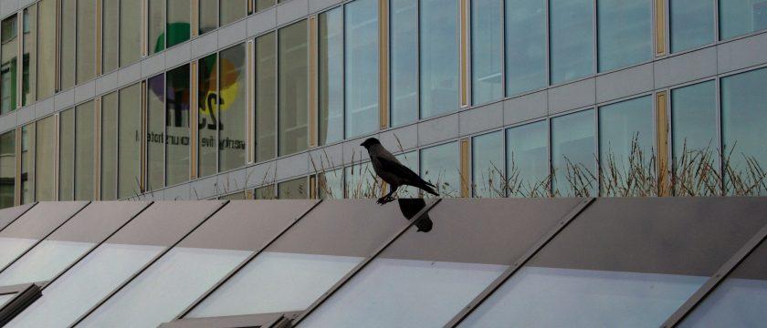 building-bird-control