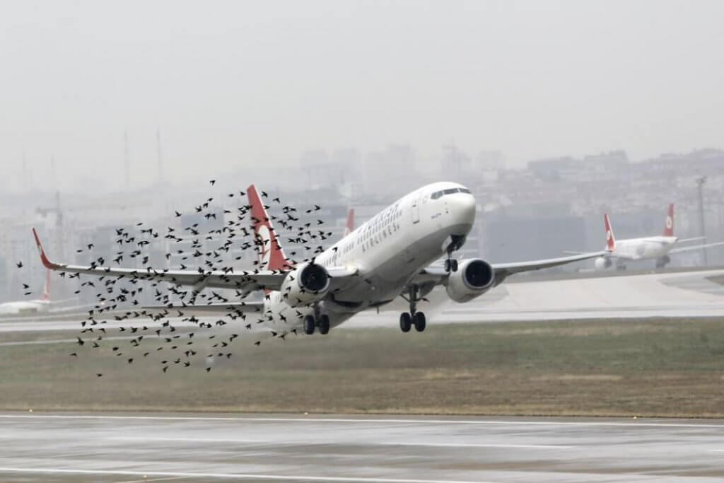 Bird strike – an increasing risk