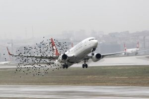 Bird strike – an increasing risk