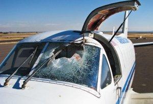Bird strike – collision with windshield of plane