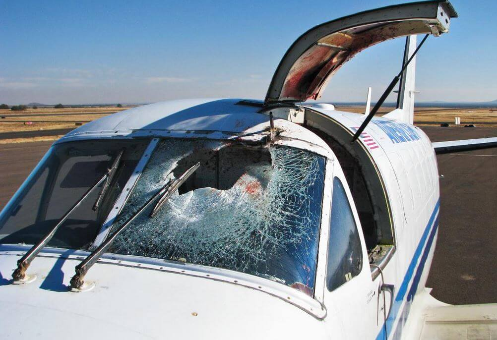 Bird strike – collision with windshield of plane