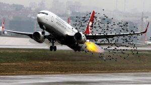 Bird strike prevention OAR