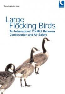 large flocking birds